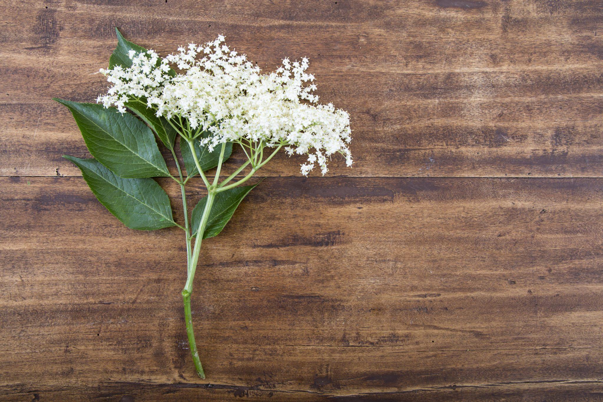 Fiori Selvatici e Salvia