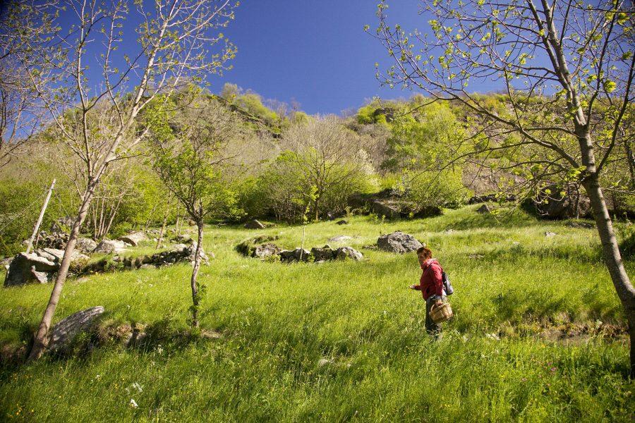 corso di foraging